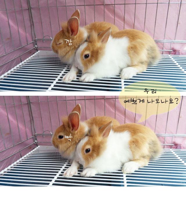 쌍둥이 토끼