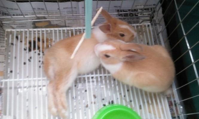 단미&다솜